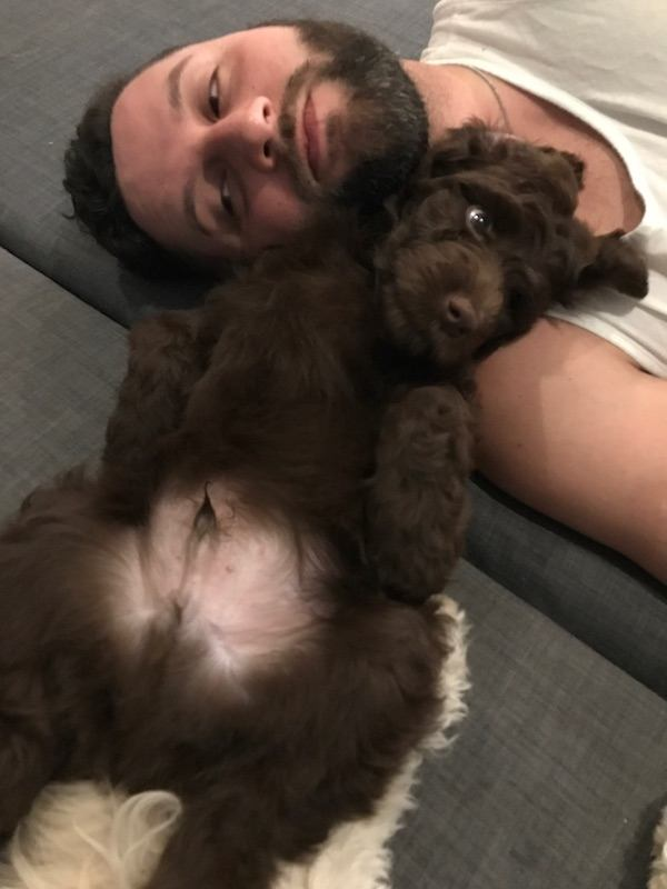 Puppy Lying On His Back