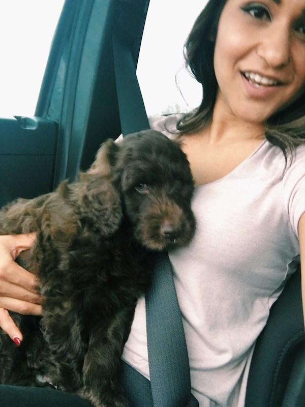 Baby Puppy Car Ride