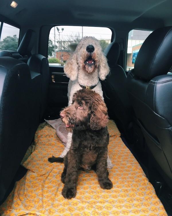 Puppy Car Ride