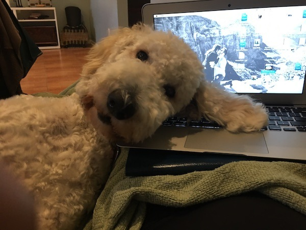 Puppy Is A Work Distraction