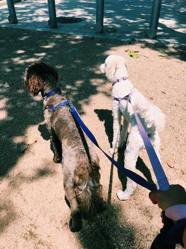 Best Friends On A Walk