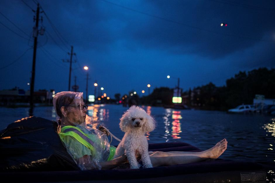 Woman and her poodle in flooded waters in Houston, Hurricane Harvey