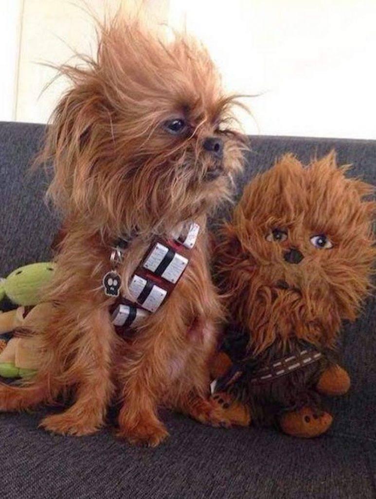 Chewbaca Dog Costume