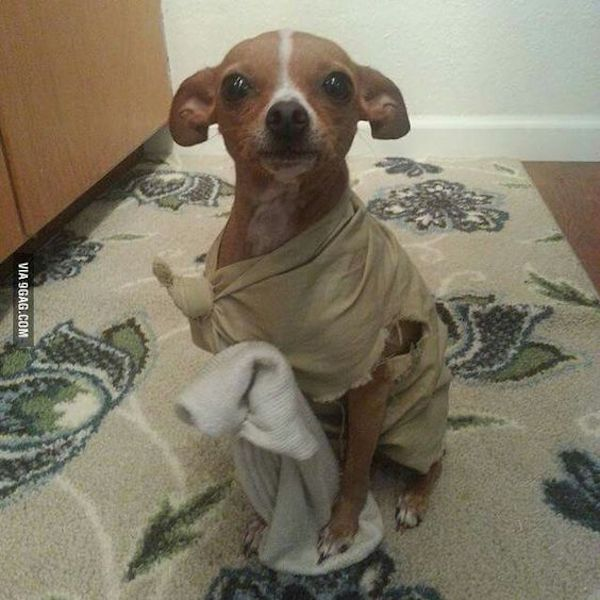 Dobbie Dog Costume