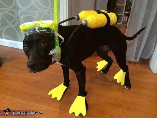 Scuba Steve Dog Costume