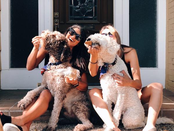 Homemade Dog Treats Peanut Butter Recipe